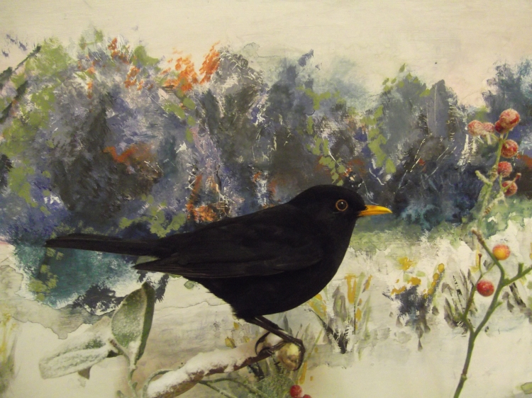 blackbirds-in-snow-009
