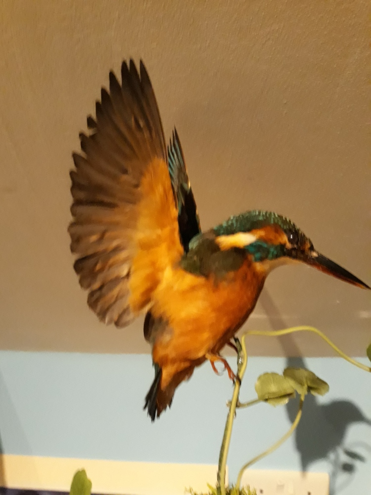 training taxidermy course jan.2018 404